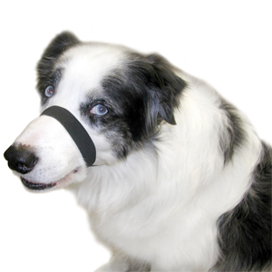 Quiet Dog The Gentle Shush Review