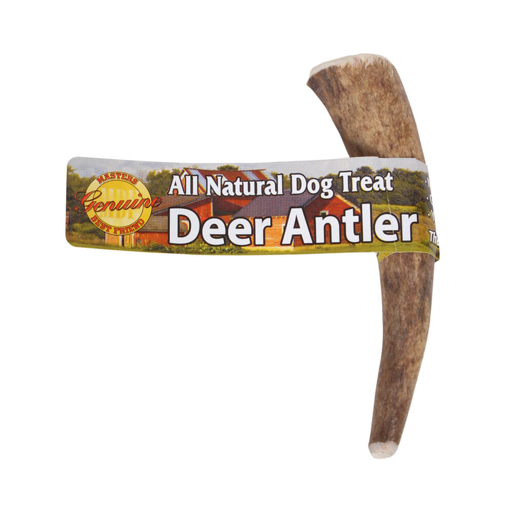 Masters Best Friend, Solid Antler