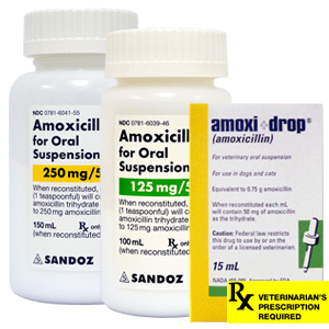Amoxicillin Rx Oral Suspension